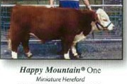 Happy Mtn 1 Bull