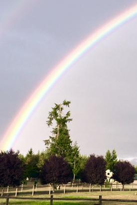 rainbow over miniature cattle pastures