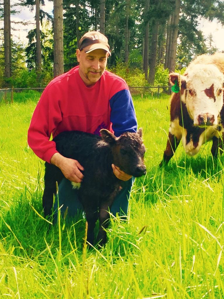 miniature calf helen