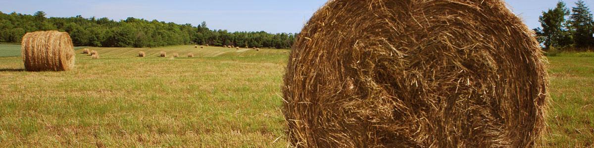 rural scenic_bales